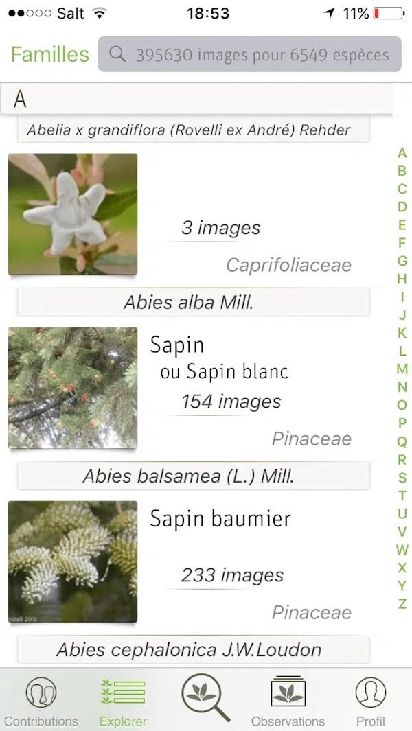 Plant Net, une application de reconnaissance des plantes