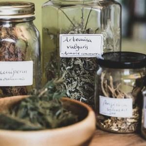 Atelier sur les plantes médicinales pour soigner sa famille, Cueilleurs Sauvages