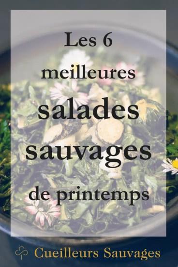 Le printemps regorge de délices et de trésors. Voici mes 6 plantes sauvages préférées à utiliser en salade, sans modération!