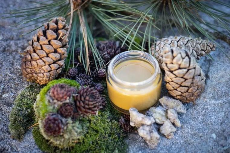 Baume à la résine de pin sylvestre, Pinus sylvestris