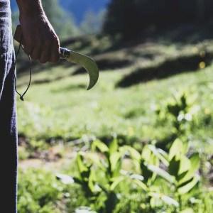 Cours sur les plantes sauvages comestibles et médicinales aux Pléiades. Cueilleurs Sauvages