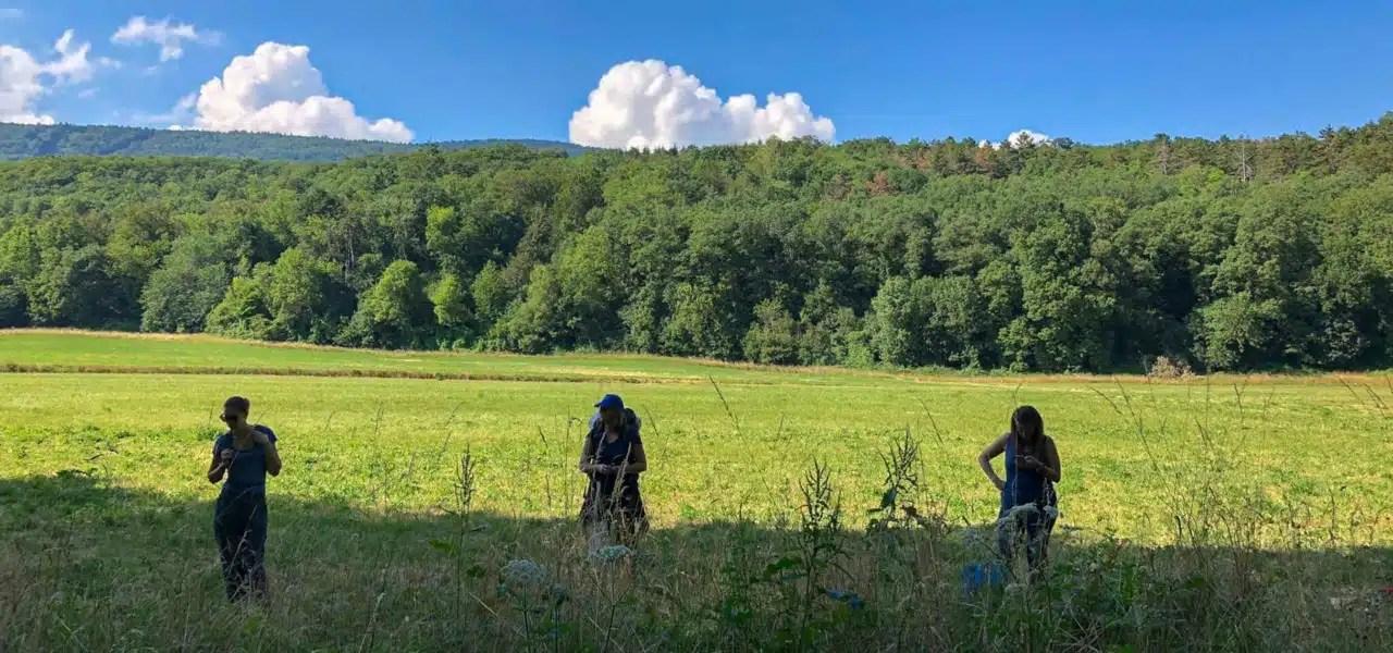 Cours prives sur les plantes sauvages pour particuliers en Suisse romande. Cueilleurs Sauvages