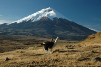 """Vulcan Cotopaxi: """"The Beast of the Andes"""""""