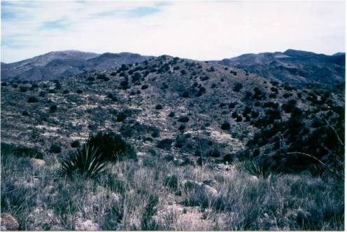 Cajon Hillsides - BEFORE - First year of rest without grazing
