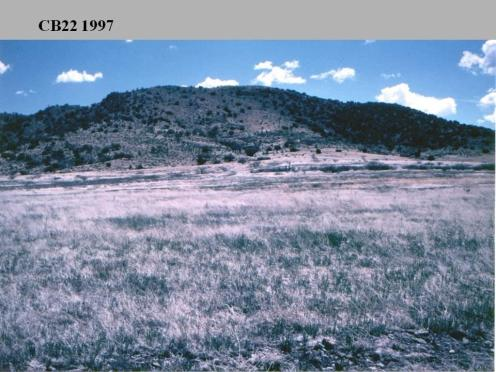 Upland Grasslands - BEFORE