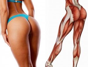 cellulite-muscles