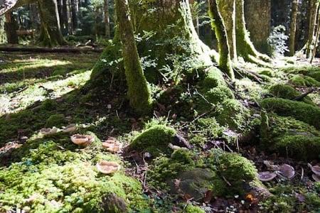 Musgo y setas en el bosque