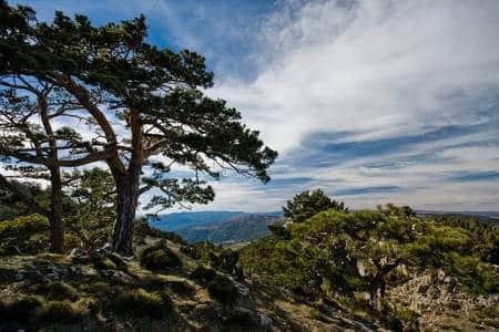Subida a la cumbre del Peñagolosa (1.813 m.) 6