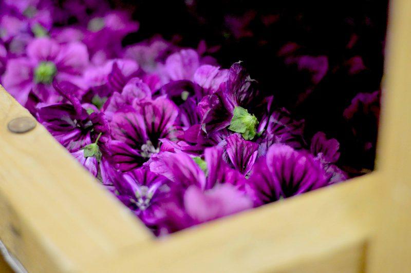 Beauty-Garden-fleurs-mauves