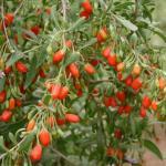 Semillas de Lino y Bayas de Goji