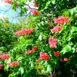 El Castaño de Indias, es un árbol muy medicinal