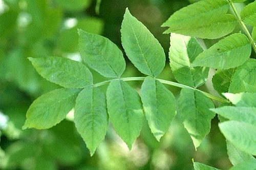 9 Plantas medicinales para tu salud