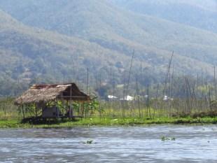 Myanmar–Inle Lake–Floating Garden