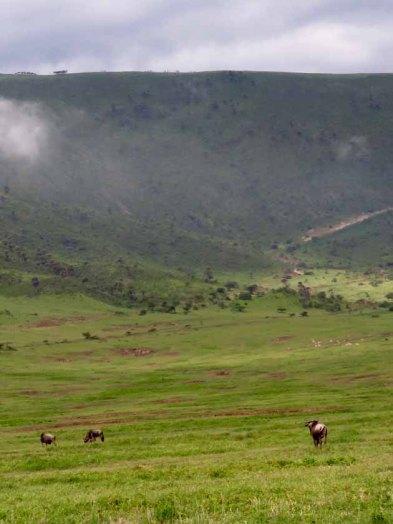 Tanzania–Ngorongoro Crater Rim To Floor