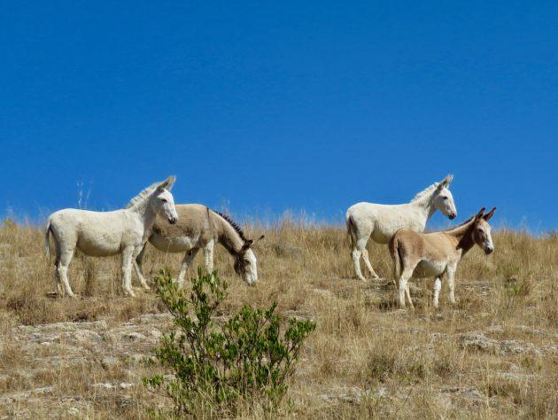 Cañada de la Virgen–Wild DOnkeys