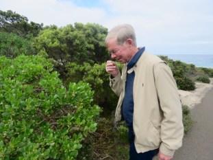 kangaroo Island–Sampling wild juniper