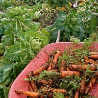 vegetable varieties for the willamette valley
