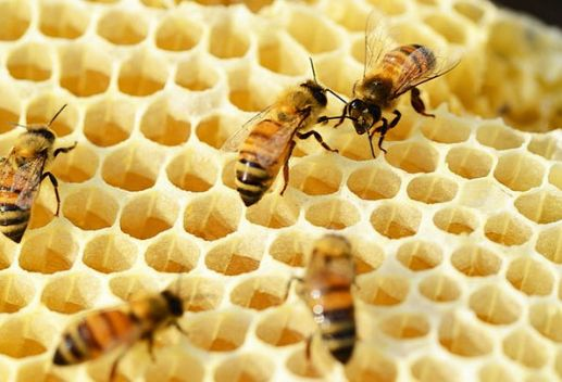bees making honey on honey comb