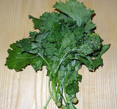broccoli rabe, rapini, broccoli raab, broccoletti