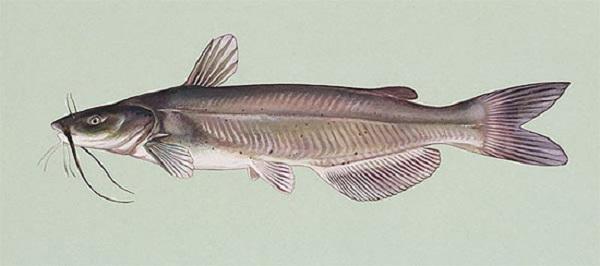 catfish untold stories part 10