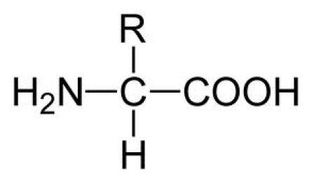 Alpha-amino acid