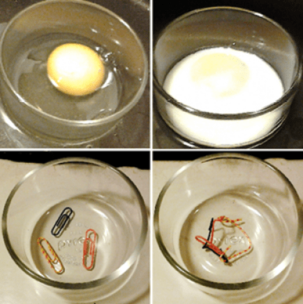 egg white protein denaturation by cooking analogy with paper clips