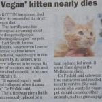 NO, You Can't Feed Your Cat a Vegan Diet