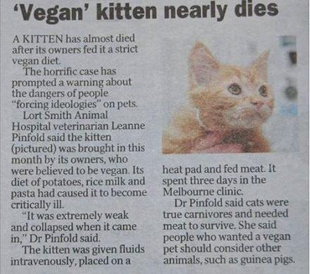 Vegan kitten nearly dies report