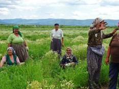 ethnie turque dans les champs de camomille (2)