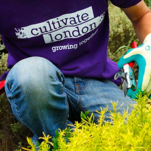 Cultivate-London-Landscaping6