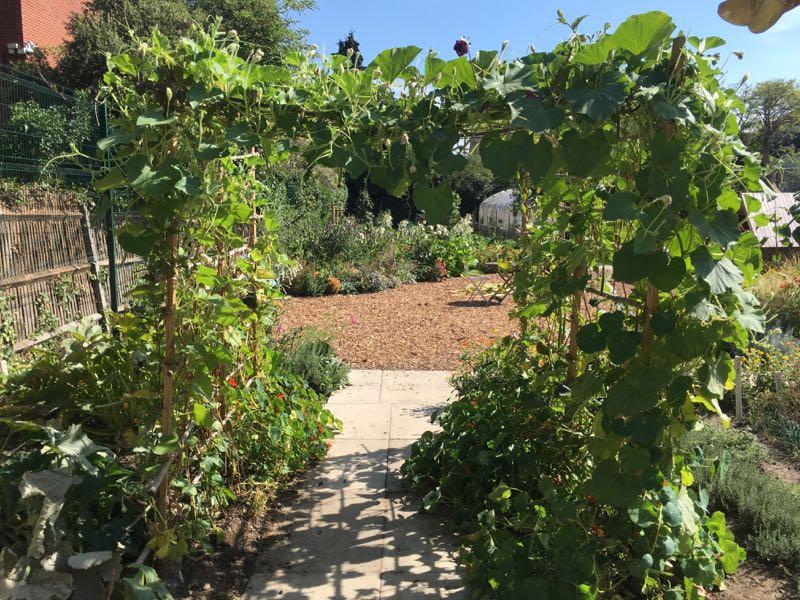 Cultivate-London-Salopian-Kitchen-Garden-August-2016_1003