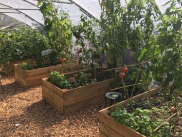 Cultivate-London-Salopian-Kitchen-Garden-August-2016_1024