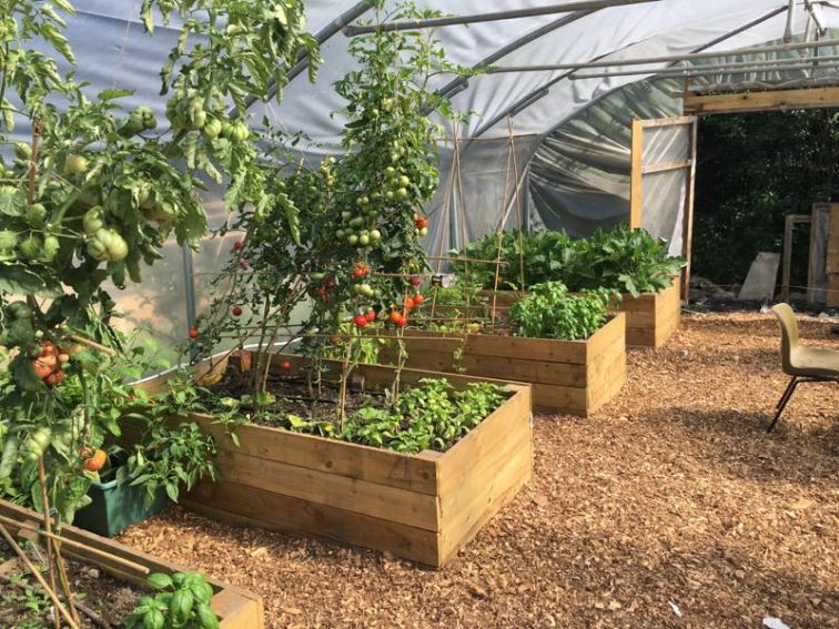 Cultivate-London-Salopian-Kitchen-Garden-August-2016_1025
