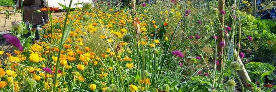 Cultivate London Urban Farm and Social Enterprise