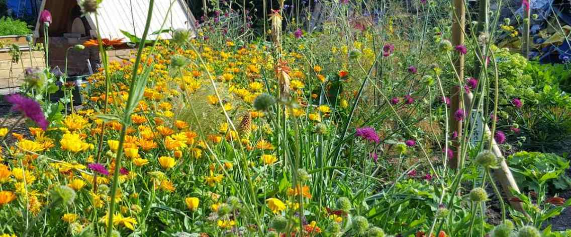 Cultivate-London-Salopian-Kitchen-Garden-Wild-Flowers