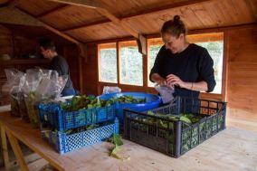 Cultivate-London-Salopian-Kitchen-Garden_1059