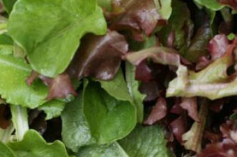 VegNews 12th September- Autumnal salad bags