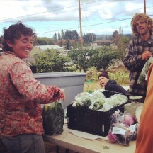 Bagging produce during a Wednesday work party