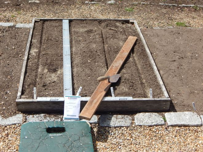 HERE'S THE CARROT BOX SHOWING  MY PLANTING BOARD FOR MAKING THE SHALLOW FURROW, MY TRUSTY SHEET ROCK SQUARE FOR HANDY SPACING AND MY MASON'S TROWEL FOR COVERING THE ROWS,  AND SMOOTHING THINGS OUT.