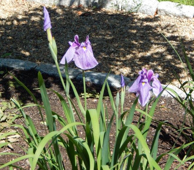 Garden Calendar – 4th Week of June