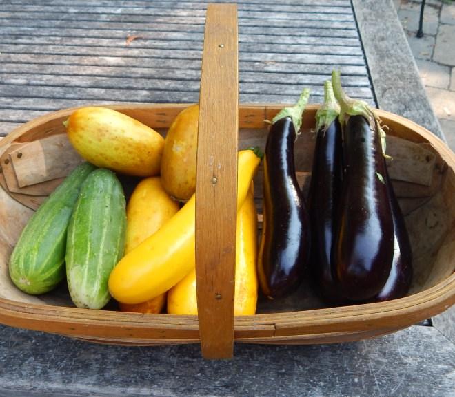 Garden Journal – 4th Week of July