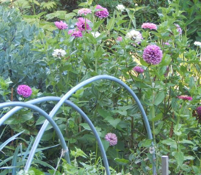 Garden Journal – 2nd Week of August
