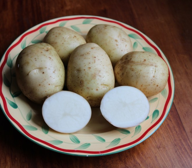 IN PRAISE OF AC CHALEUR POTATOES