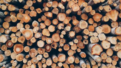 rondin bois cultiver champignon