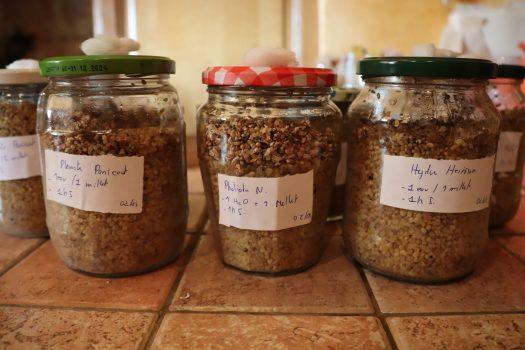 Le grains gonflent durant la stérilisation.