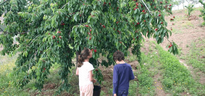 Cultivos da Época – plantar e colher em Junho