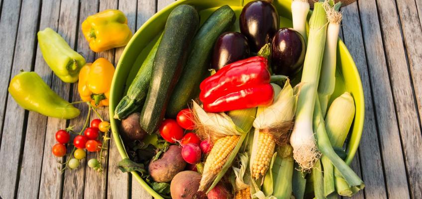 Cultivos da época – Plantar e colher em Setembro