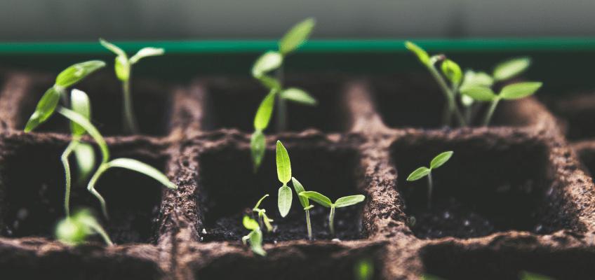 Como semear em viveiro