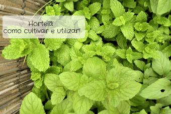 Hortelã – como cultivar e utilizar!