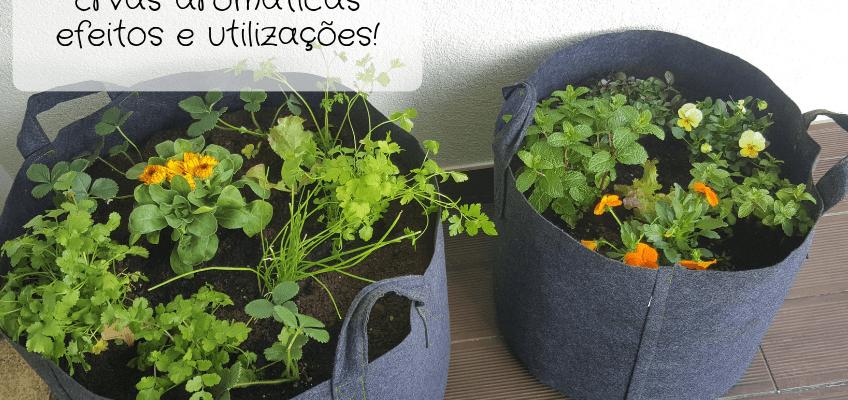 Ervas aromáticas: efeitos e utilizações!